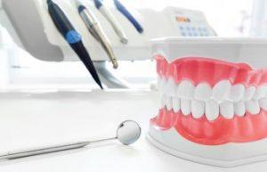 Dental Model Gums and Teeth Jefferson GA
